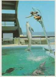Dolphins Perform at Oceana - Front.jpg